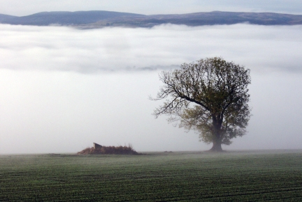 This image was taken the same day as Misty Perthshire - 2 very different photographs by simply swinging through 45 degrees :-)