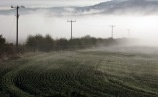 I loved the fading telephone poles and the shape of the emerging crops