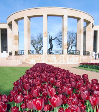 Omaha Tulip