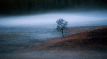 At this time of year the days are very short here in Moray and a little darkness can fill your mood - this dusk image seemed to capture that feeling - a lone tree peaking through twilight mist - spooky in a sensual way.......