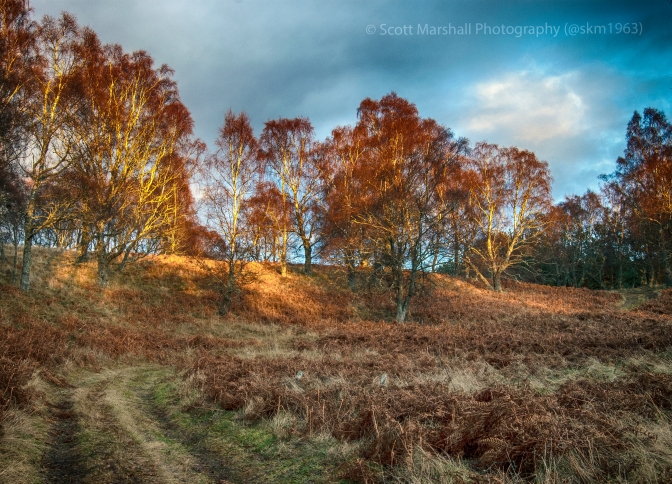 "You have no idea how often I have tried photographing trees - with a very low success rate. Mr David Oakes however  rarely gets it wrong - please check out his blog http://davidoakesimages.wordpress.com/ to guage for yourself. However on this occasion the sun was particularly low in the sky and just tickling a few branches with just enough light to be interesting - so there you have it a ""homage to Mr Oakes"" - enjoy"