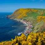 Crovie ~ Spring Guise
