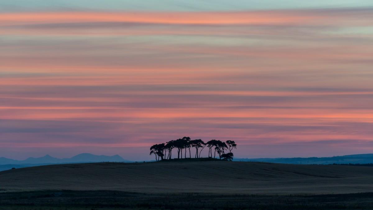 golanfield-copse-sunset