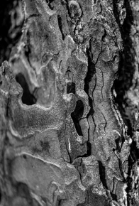 Bark Structure