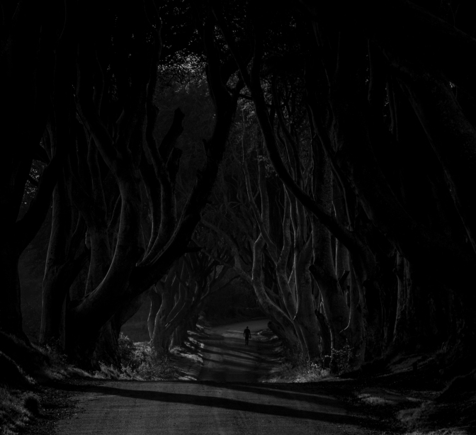 Dark Hedges V